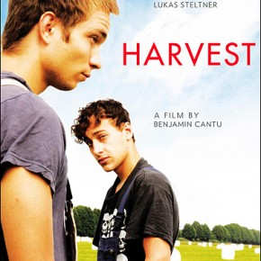 large_harvest